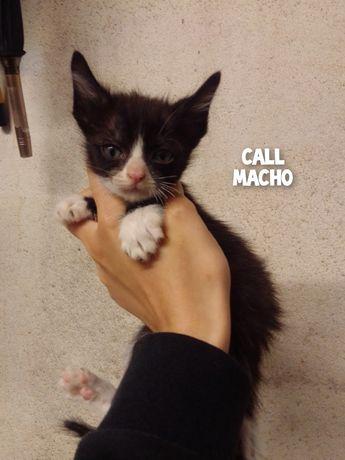 Call- gatinho preto e branco disponivel para adoção