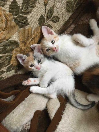 Милі кошенятка шукають люблячу сім'ю
