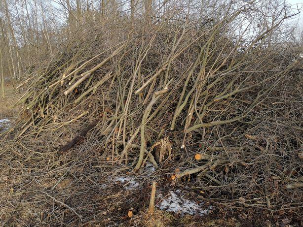 Oddam gałęzie, drzewa pochodzące z wycinki