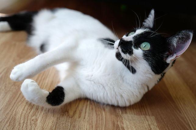 Social - gata para adoção