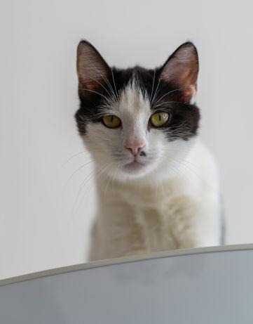 Соня-11 мес, красивая и уникальная котодевочка