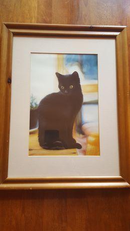 Sprzedam obraz.Kolekcja-koty.