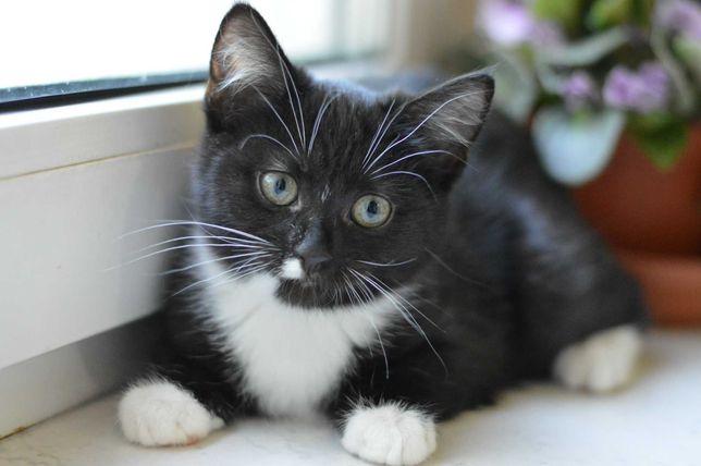 Сладкая девочка котенок ищет семью.