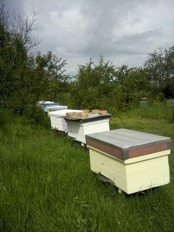 Ульи для пчел продам