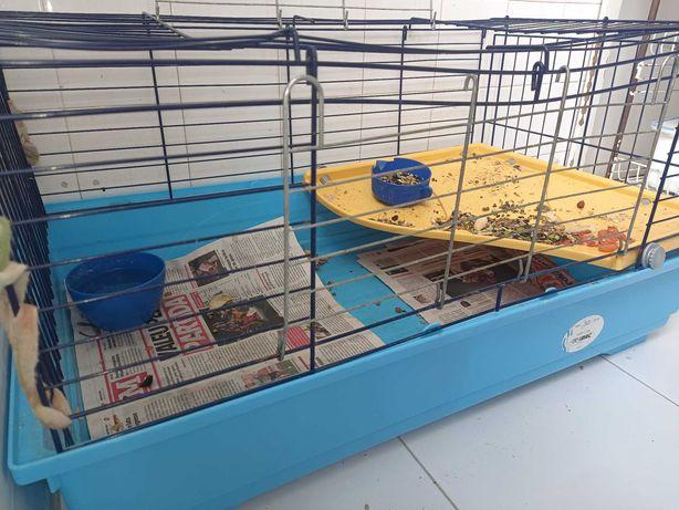 Gaiola animais Coelhos Ratos Porquinhos India