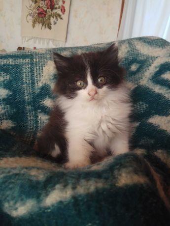 Чёрно-белые котята