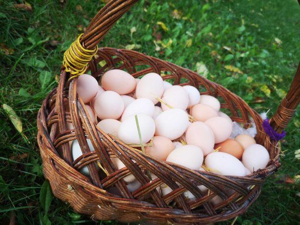 Jajka wiejskie, kaczki białe,gęś ekologiczna