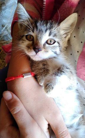 Śliczne kotki do oddania za darmo