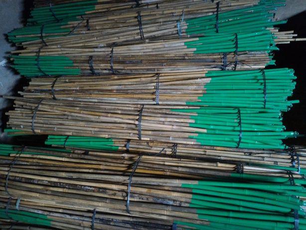 Canas tutores bambu