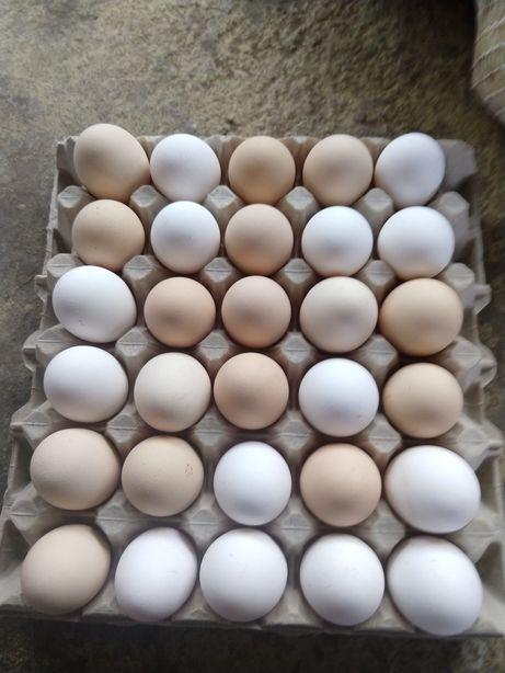 Świeże jaja z dowozem do domu