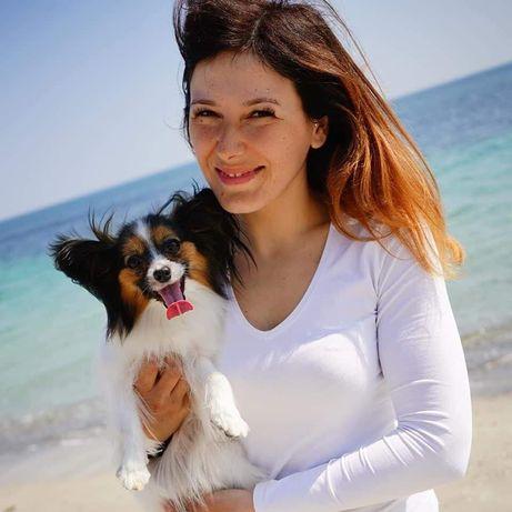 Воспитание  / обучение / дрессировка собак , кинолог, хендлер