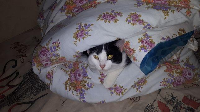 Кошка черно-белаячерно-белая возраст 1 год стерилизована мурчалка