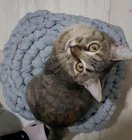 Срочно кошка подросток ищет тепло и уют