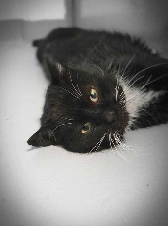 Cezary - wyjątkowy kot czeka na dom...