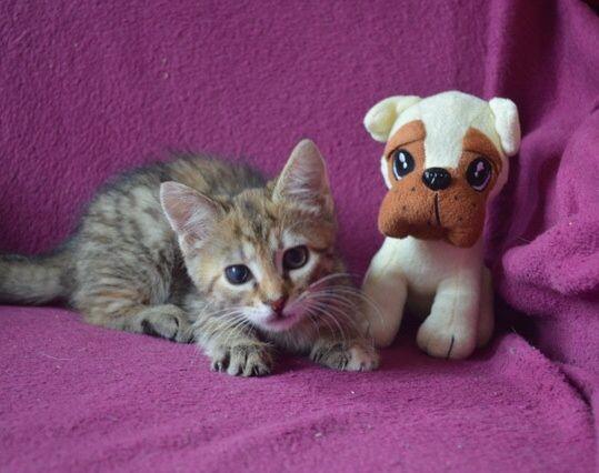 Очень ласковый, милый котенок в добрые руки