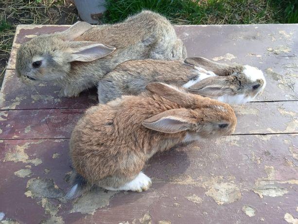 Młode króliki ..
