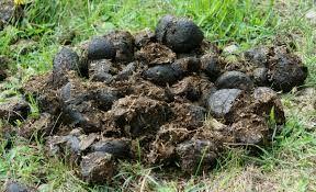 Nawóz ekologiczny obornik koński worki 60 L czysty