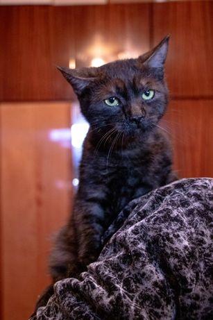 Котята, котик мальчик в добрые руки, бесплатно в добрые руки)