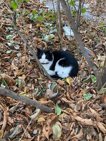 Отдам чёрно белого кота , 1,5 года