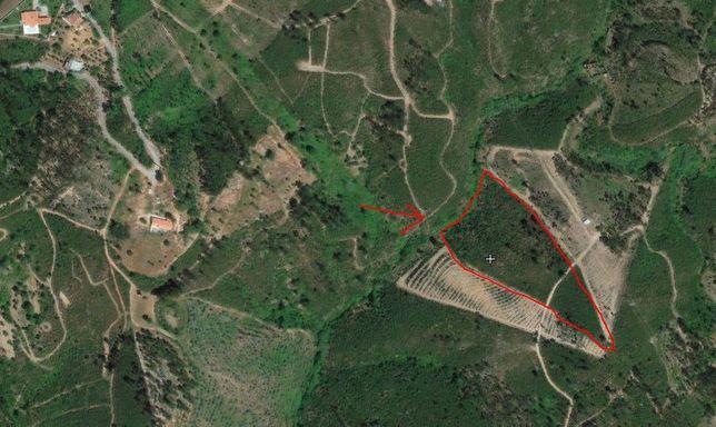Terreno Abrantes - Martichel - Costa do Lagar