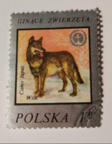 Znaczek pocztowy, ginące zwierzęta, wilk.