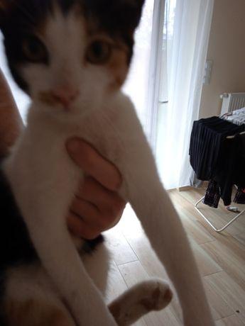 Znaleziono młoda kotkę