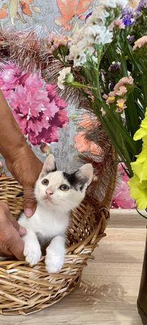Подарю счастливого котенка