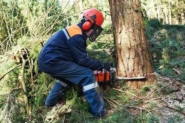 Ścinka drzew,wycinka drzew,przycinanie drzew,okrzesywanie drzew Śląsk