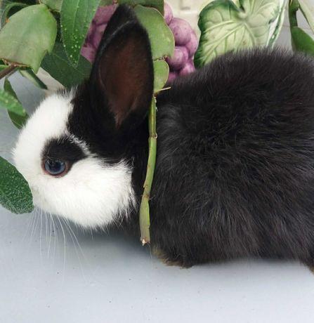 Декоративные миниатюрные крольчата