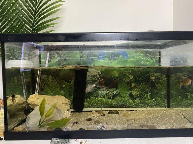 Aquario grande com riltro e led