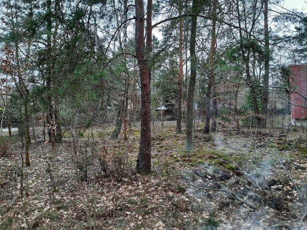 sprzedam   lub zlecę wycinkę drzew rosnących   w Aleksandrowie Łódzkim