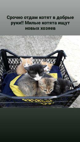 Милые котята от кошки мышеловки