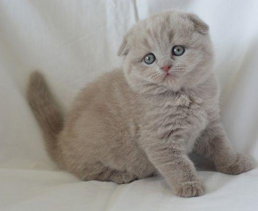 Продам красивых котят