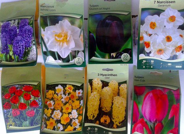 Bolbos vários . tulipas, narcisos, jacintos, jarros