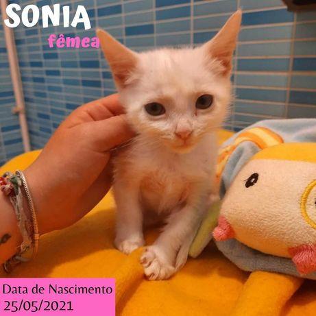 Gatinha 2 meses para adoção (Sonia)
