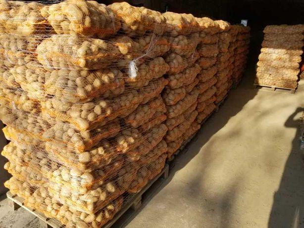 Ziemniaki 3.5-5.5