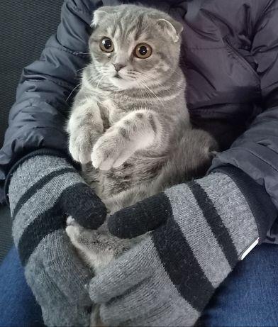 Отдам в хорошие руки кошечку.