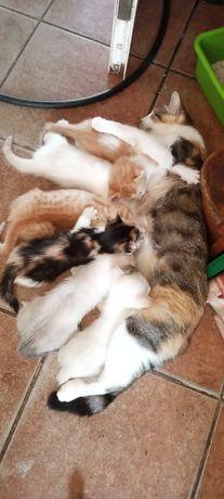 Gatinhos bebes para adoção