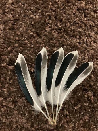Перья птиц натуральные декоративные для творчества