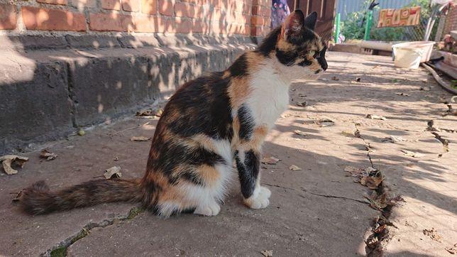 Отдам в хорошие руки красавцев котят