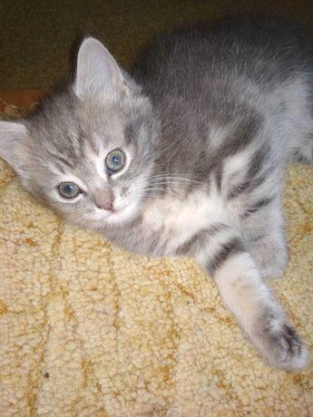 Кішка кошеня в ДАР