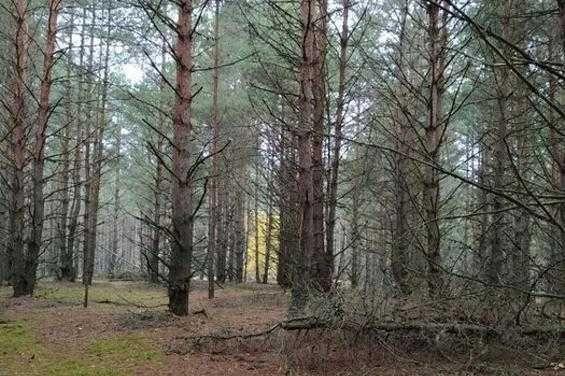 15 соток для дома в лесу Сухолучье за 5200$ Вышгородский район
