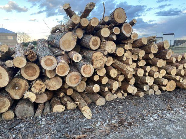 Drewno Drzewo SOSNA , SWIERK Cale Woj. Podlaskie