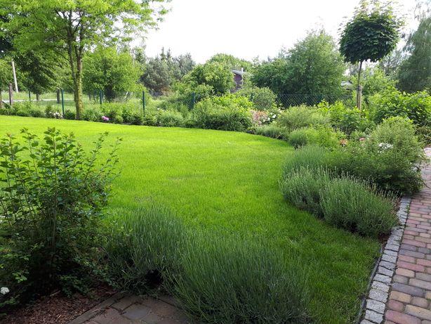 Prace ogrodowe WERTYKULACJA koszenie trawników przycinanie krzewów