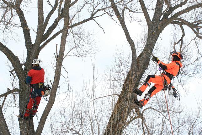 Зрізаня дерев, обрізка, спилюванная, авто вишка, розчищення території,