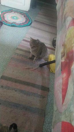 Пропала кошка в Комунаррском районе