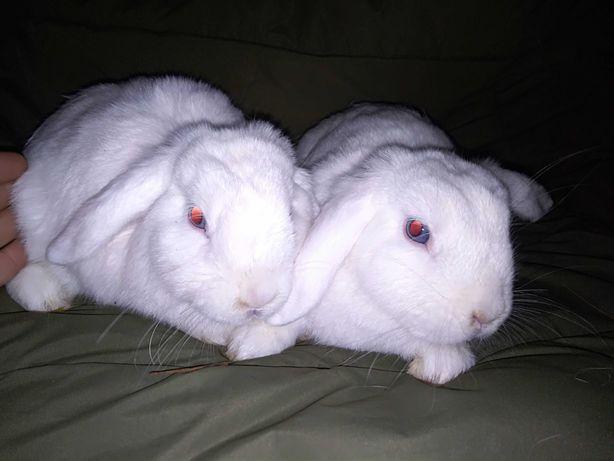 Doação coelhos orelhudos