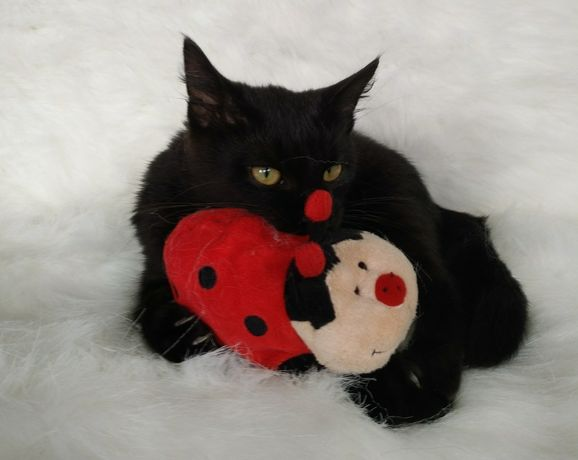 Чудо котенок Лио 5 мес . Котенок для души.
