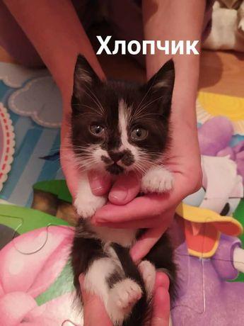 Симпатичні кошенята шукають домівки!