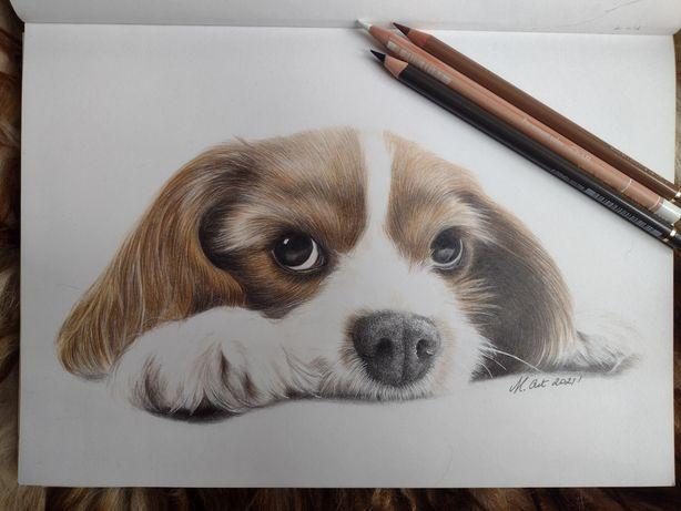 Rysunek portret psa A4 kredki